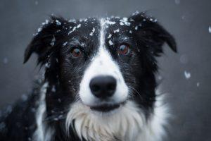 Comment se motiver à sortir son chien en hiver ?